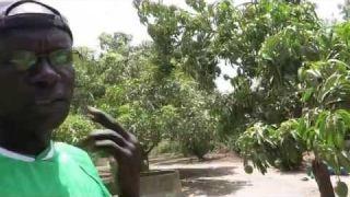 Aliou Nidaye, agriculteur biologique au Sénégal
